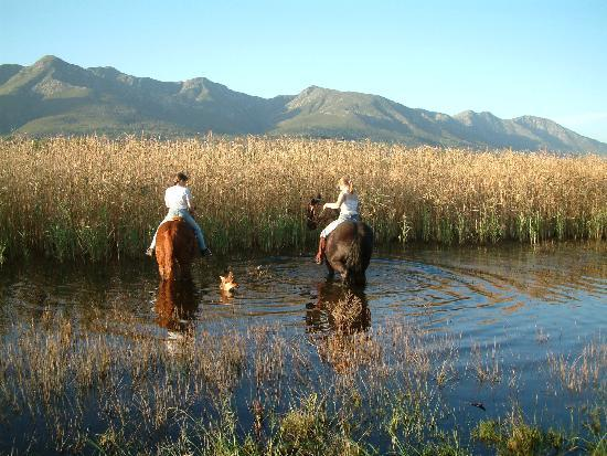 Stanford, แอฟริกาใต้: Horseriding along the Klein River