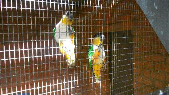 Rainbow Jungle: Very friendly birds