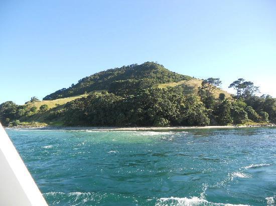 Dolphin Seafaris: Mount Maunganui view