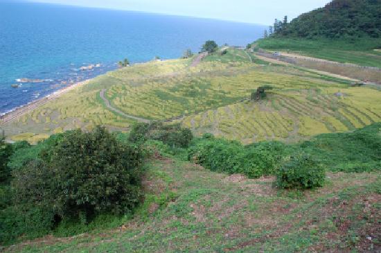 Wajima, Japan: 海岸からの急斜面の棚田