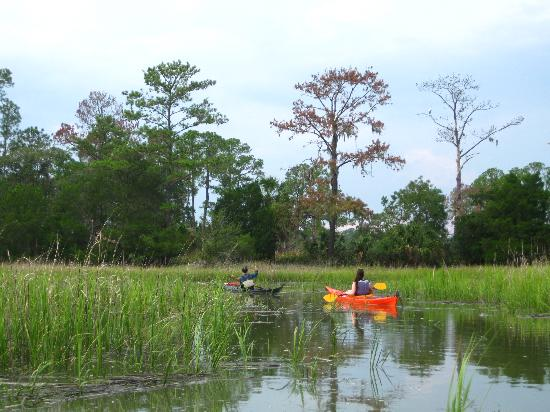 Savannah Canoe and Kayak : Going through the marshes with Nigel