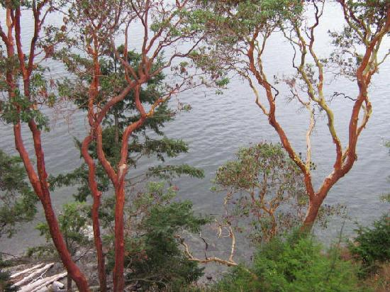 Cascade Harbor Inn : Madrona trees from our balcony.