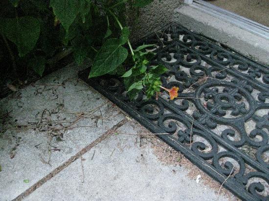 Gites La Balancelle: The doorstep