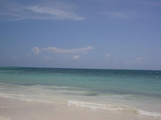 Ocean Coral & Turquesa: sea xx
