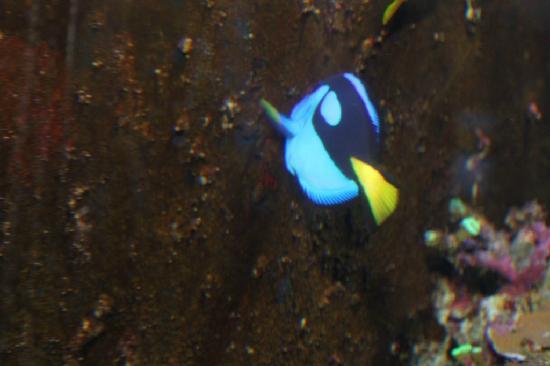 Sea Life Kelly Tarlton's Aquarium: ...