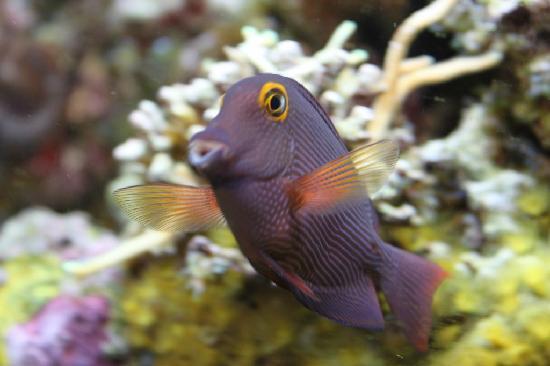 Sea Life Kelly Tarlton's Aquarium: funny fish