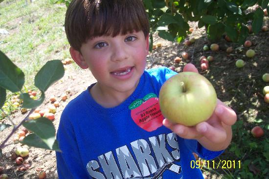 Ellijay, Georgien: Apple Picking!