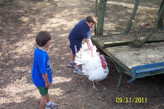 Ellijay, Georgien: Petting the big Turkey!