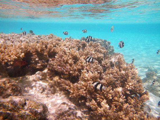 Vaikoi: Aroa beach snorkelling right off shore