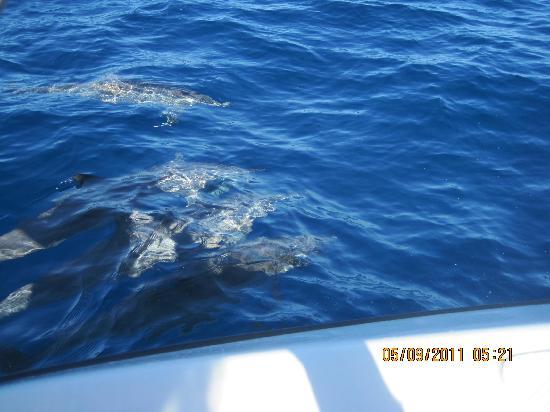 Heritage Awali Golf & Spa Resort: Dolphin Trip