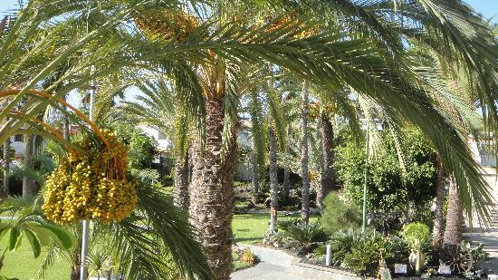 Melia Tamarindos: garden from restaurant