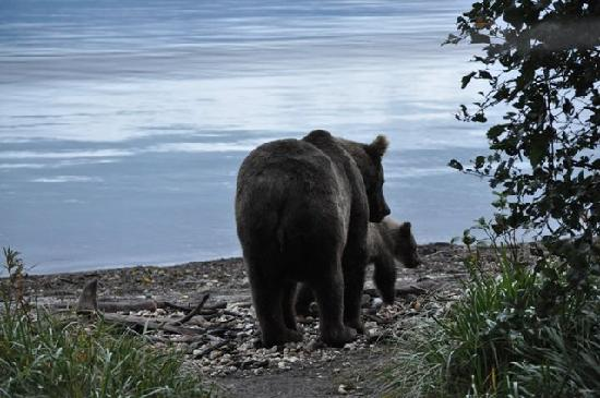 Brooks Camp: Sow and cub