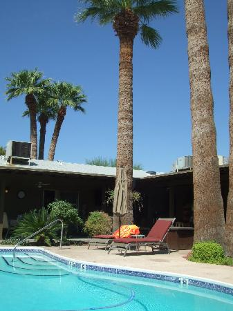 Arizona Sunburst Inn: Sun-bed and palm trees