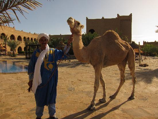 Kasbah Hotel Chergui: Camel by the Pool
