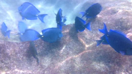 เซล-ฮา ปาร์ค: Awesome snorkeling!