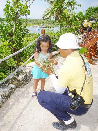 เซล-ฮา ปาร์ค: iguana