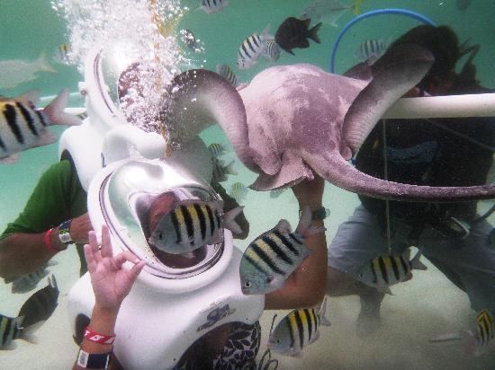 เซล-ฮา ปาร์ค: SeaTrek w/ stingrays