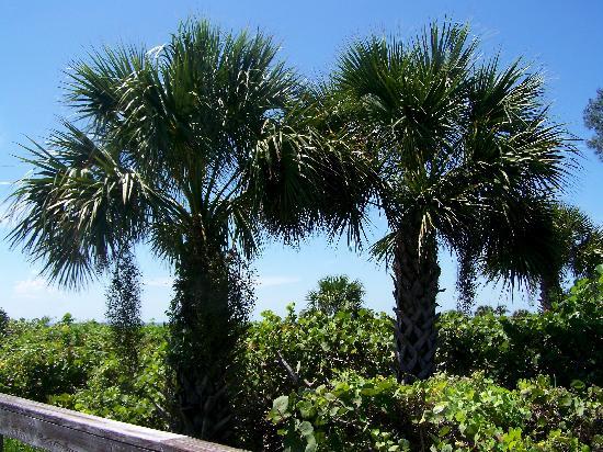 เกาะซานิเบล, ฟลอริด้า: trees