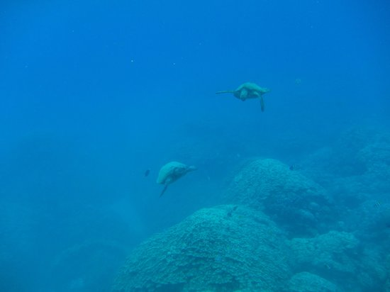 The Ocean Project On Maui: sea turtles