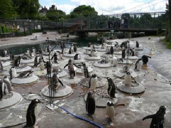Edinburgh Zoo: Love the penguins