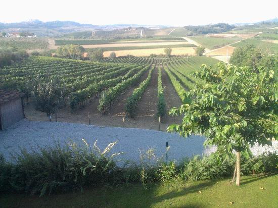 L'Orto di Panza: Il panorama delle vigne!