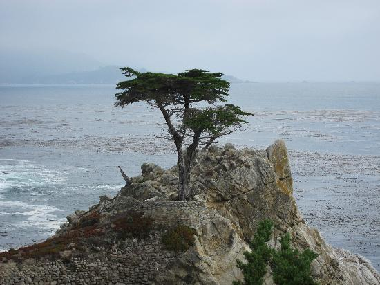 17-Mile Drive: The Lonely Cypress - 250 years old!