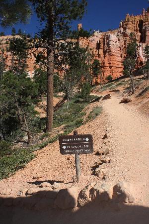 Navajo/Queens Garden Loop: At the junction of Navajo Loop