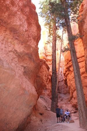 Navajo/Queens Garden Loop: Two fir trees at/near Wall Street