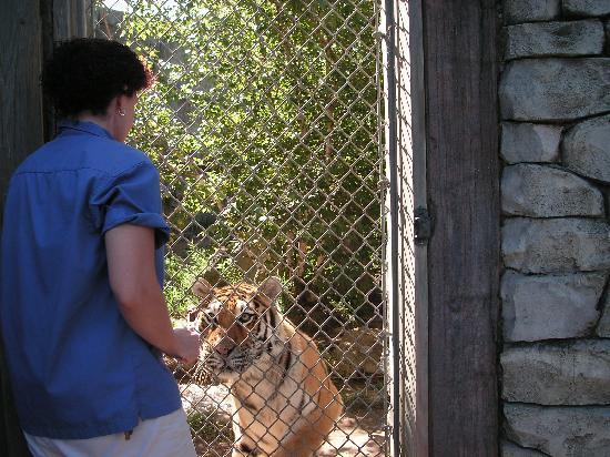 Columbus Zoo: Siberian tiger