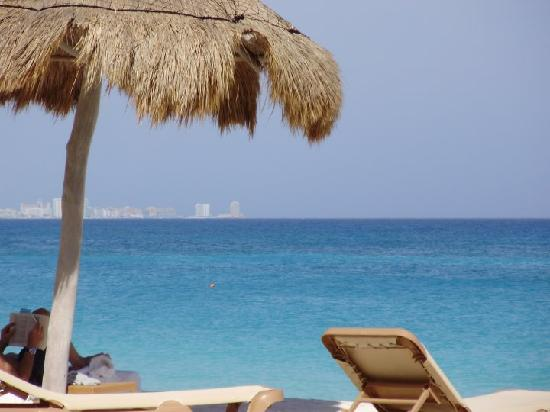 The Westin Resort & Spa, Cancun: one of the palm trees!