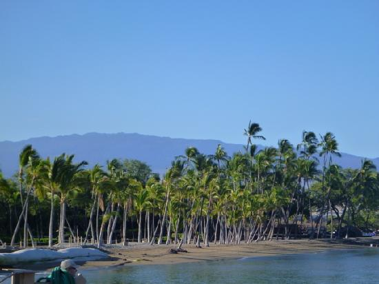Waikoloa Beach Marriott Resort & Spa: Huala Lai volcano in the background from beach area