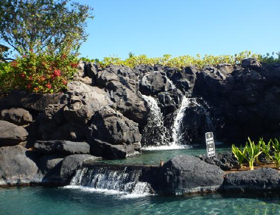 Waikoloa Beach Marriott Resort & Spa: A Mynah enjoying the falls