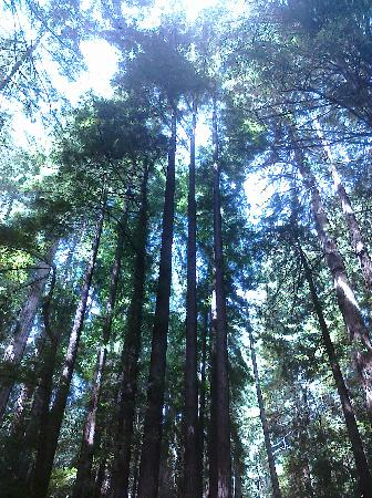Muir Woods National Monument: Quiet inspiration and peaceful solitude; worth every second!!