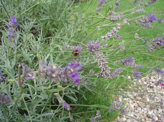 White House Farm: bees enjoying the laevdar