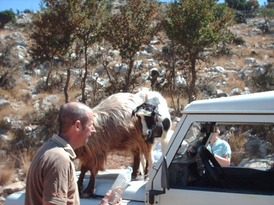 Safari Club Crete: with the goats
