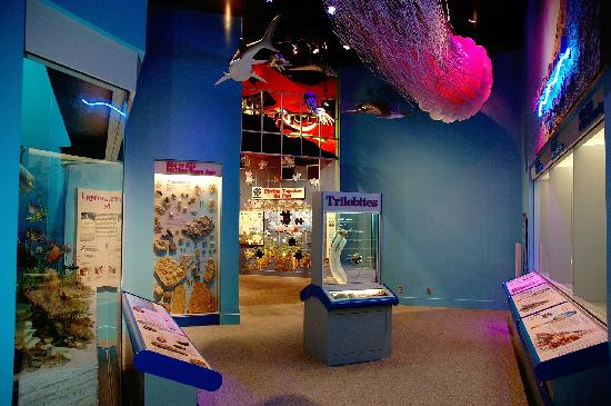 """Illinois State Museum: """"Changes"""" natural history exhibition"""