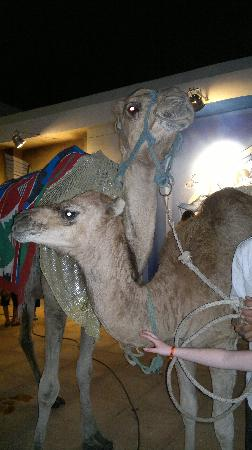 Sahara Beach Aquapark Resort: Mother and baby are brought into the hotel after the folklore show