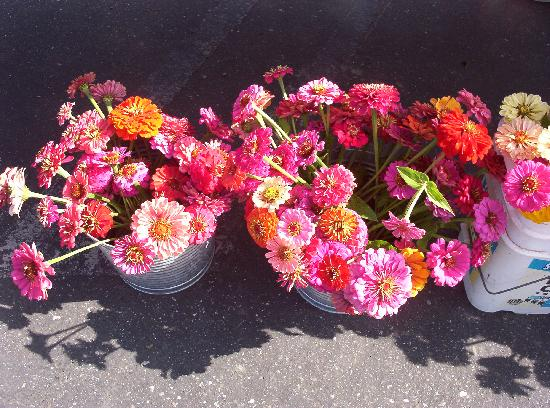 Pretty flowers to buy at the Woodland Farmers market