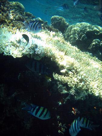 ฮิลตัน ทาบา รีสอร์ท แอนด์ เนลสัน วิลเลจ: coral near the hotel