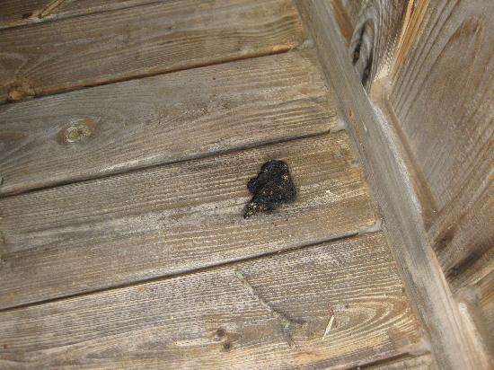 Backhome Log Cabins: Feces on porch