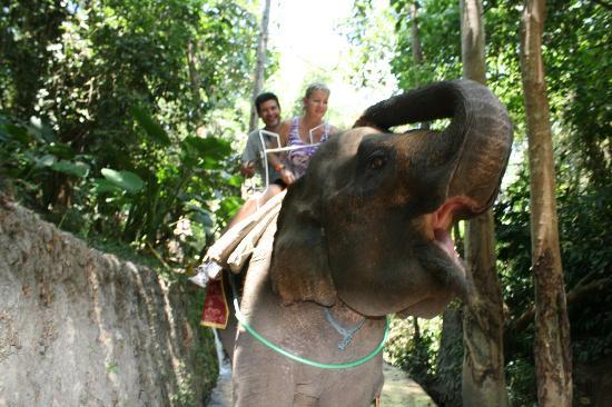 Bali Safari & Marine Park: our elephant working the camera