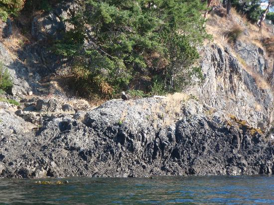Crystal Seas Kayaking - Day Tours: A bald eagle on the shore