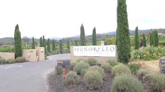 Signorello Estate Winery: Signorello Vineyards from Silverado Road