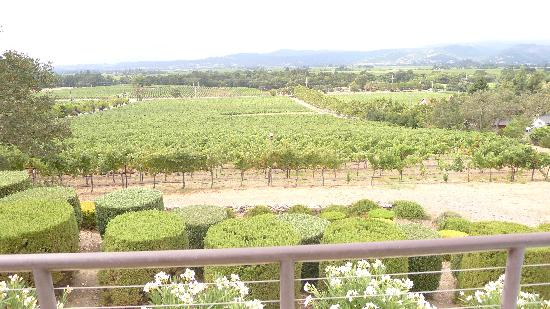 Signorello Estate Winery: View of vineyards from patio table (food/wine pairing)