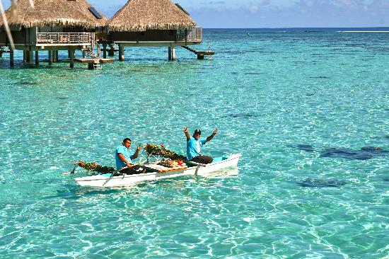 Hilton Moorea Lagoon Resort & Spa: view_1