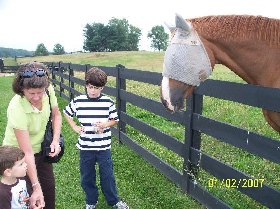 White Oak Lavender Farm: Feeding the Horses