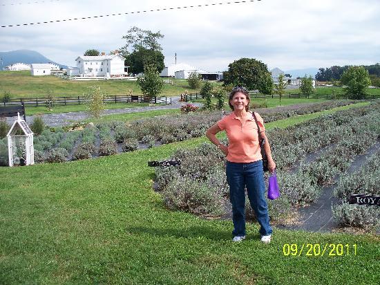 White Oak Lavender Farm: Lavender Fields