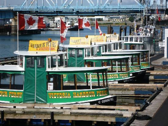 Best Western Plus Inner Harbour: Harbour tours