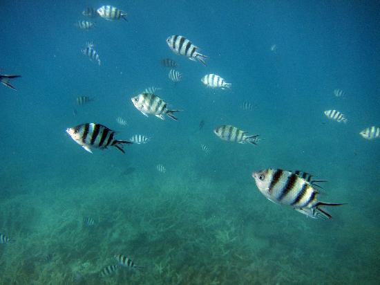 ISail Whitsundays: While snorkeling