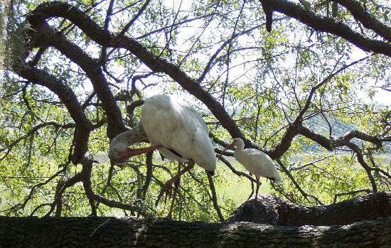 Oatland Island Wildlife Center: Birds